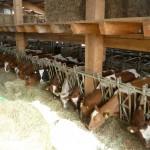 écurie3 élevage bambois