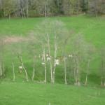 pâturage élevage bambois (2)