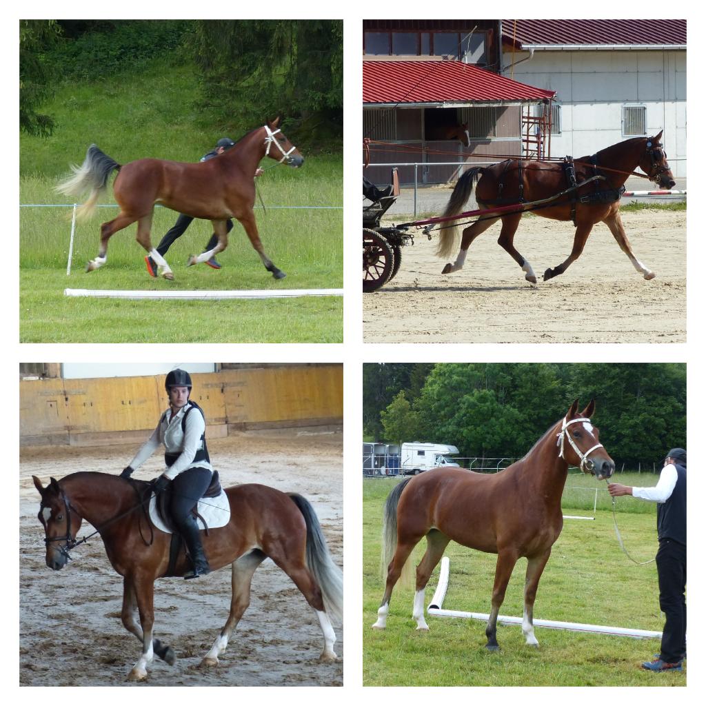 Zara a obtenu la 9ème place avec d'excellentes notes. 8 / 7 / 8 à l'extérieur, la moyenne de 8 à l'attelage et à l'équitation.
